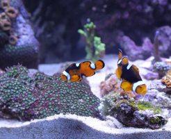 夢占い 水槽 熱帯魚 産卵