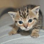 小さい猫や犬が夢に出てくる夢占いの意味について