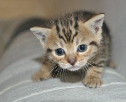 夢占い 小さい 猫 犬